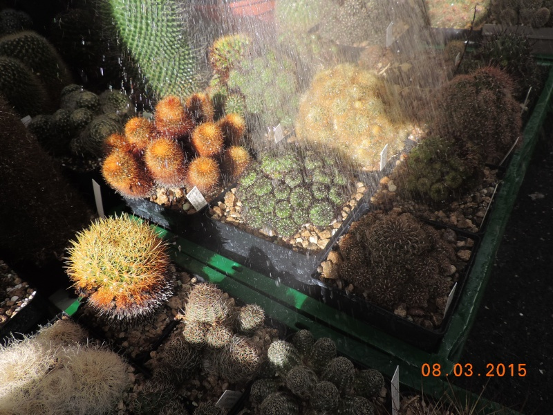 Cacti and Sukkulent in Köln, every day new flowers in the greenhouse Part 120 Bild_815