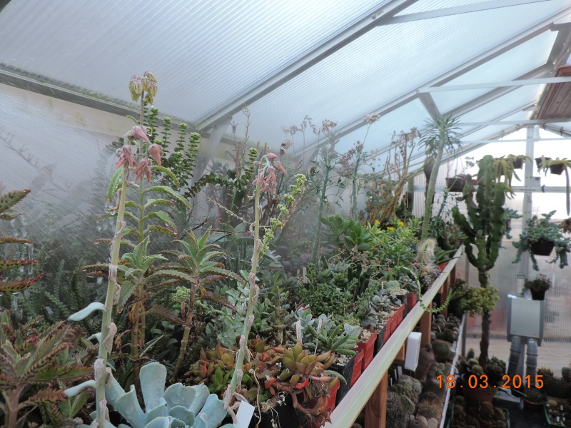 Cacti and Sukkulent in Köln, every day new flowers in the greenhouse Part 120 Bild_819