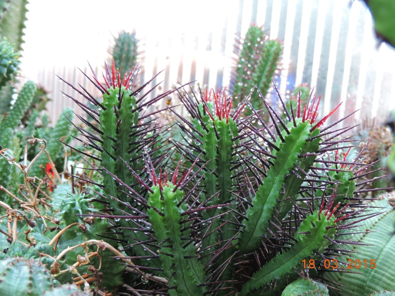 Cacti and Sukkulent in Köln, every day new flowers in the greenhouse Part 120 Bild_820