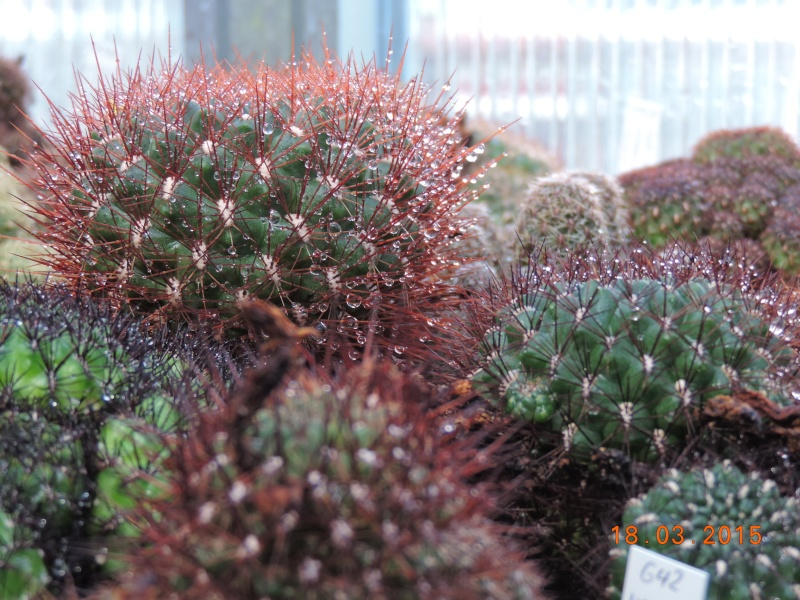 Cacti and Sukkulent in Köln, every day new flowers in the greenhouse Part 120 Bild_821