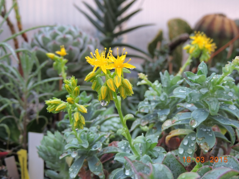 Cacti and Sukkulent in Köln, every day new flowers in the greenhouse Part 120 Bild_822