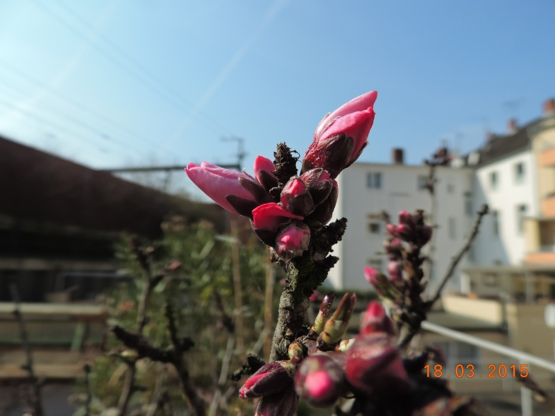 Cacti and Sukkulent in Köln, every day new flowers in the greenhouse Part 120 Bild_829