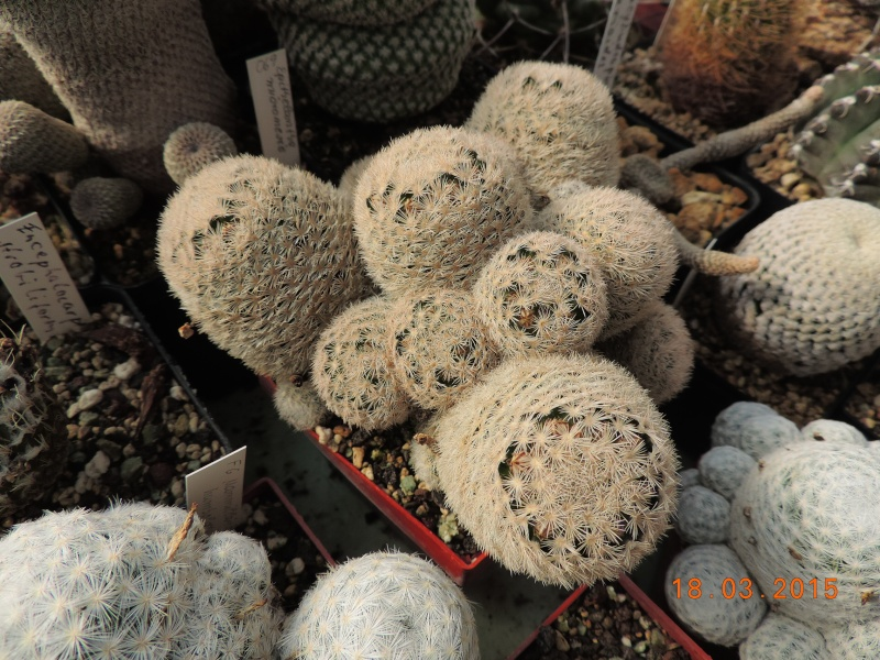 Cacti and Sukkulent in Köln, every day new flowers in the greenhouse Part 120 Bild_833