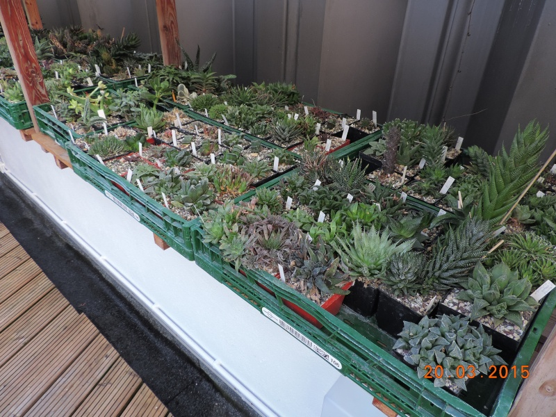 Cacti and Sukkulent in Köln, every day new flowers in the greenhouse Part 120 Bild_836