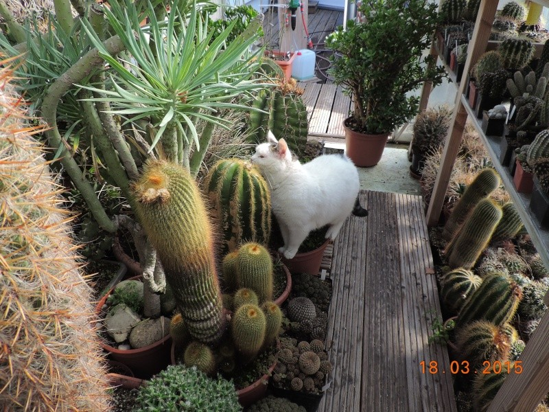 Cacti and Sukkulent in Köln, every day new flowers in the greenhouse Part 120 Bild_840