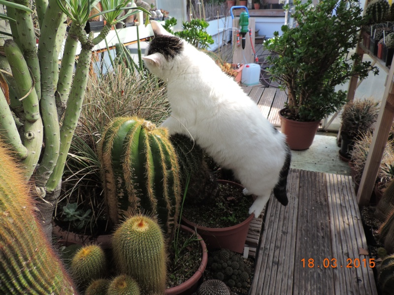 Cacti and Sukkulent in Köln, every day new flowers in the greenhouse Part 120 Bild_841
