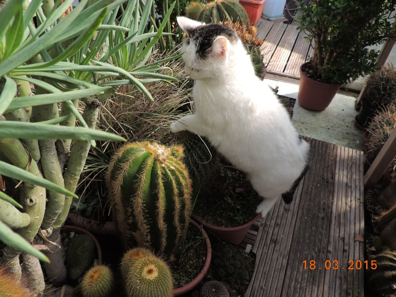 Cacti and Sukkulent in Köln, every day new flowers in the greenhouse Part 120 Bild_842