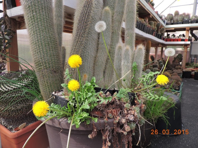 Cacti and Sukkulent in Köln, every day new flowers in the greenhouse Part 120 Bild_845