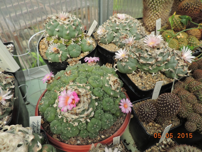 Cacti and Sukkulent in Köln, every day new flowers in the greenhouse Part 122 Bild_953