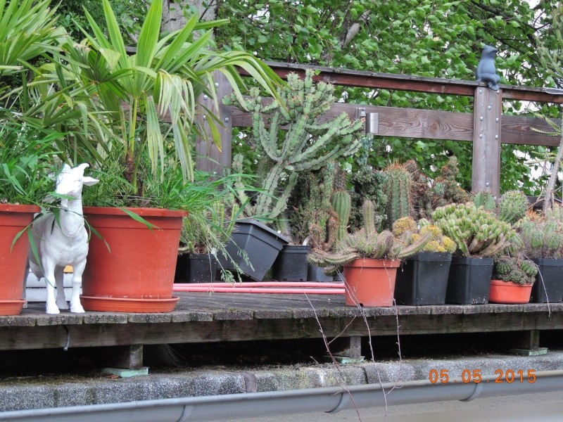 Cacti and Sukkulent in Köln, every day new flowers in the greenhouse Part 122 Bild_957