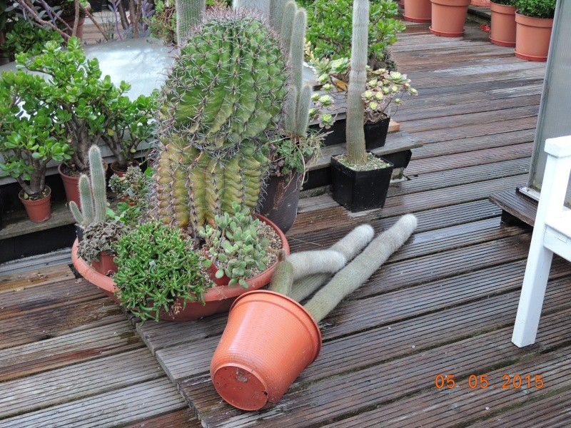 Cacti and Sukkulent in Köln, every day new flowers in the greenhouse Part 122 Bild_958