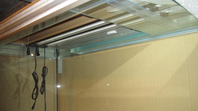 Création nouvel Aquarium amazonien 830 litres  Img_4219