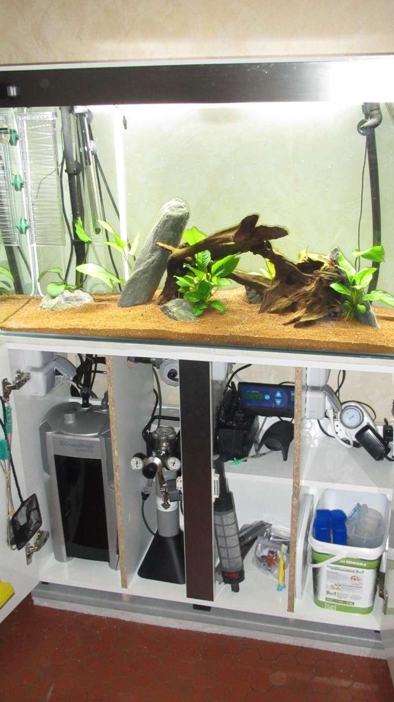 Création nouvel Aquarium amazonien 830 litres  Img_4241