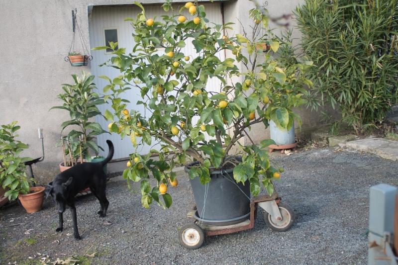 Le Citron... Img_1210