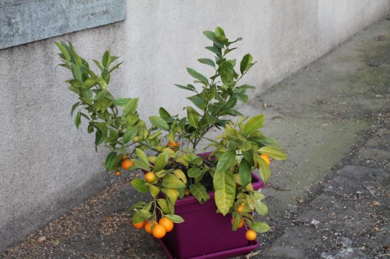 Le Citron... Img_1211