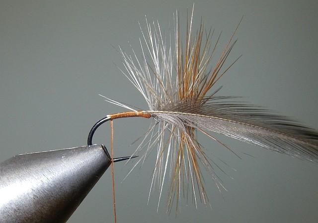 2 Palmer Tricolor P610