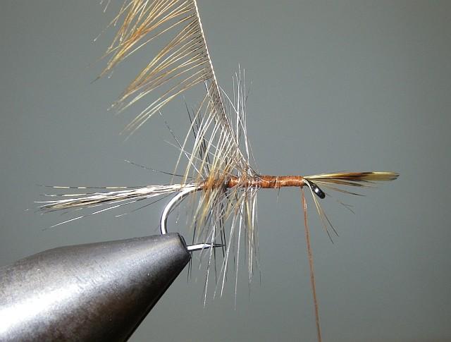 2 Palmer Tricolor Pb510