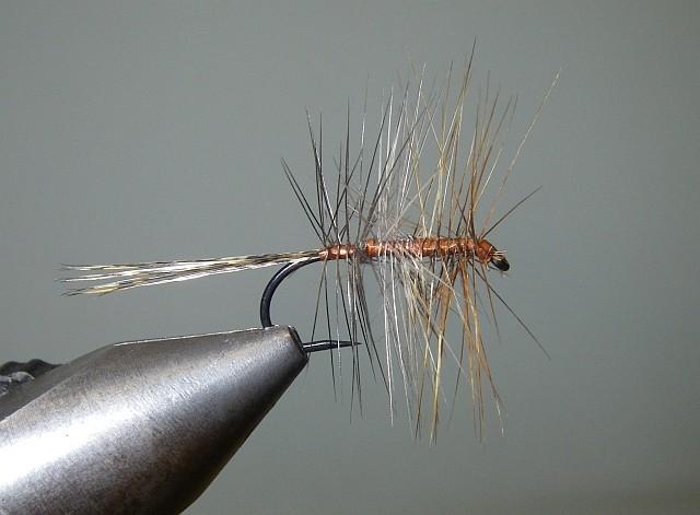 2 Palmer Tricolor Pb610