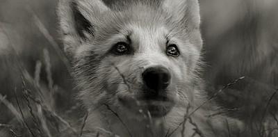 Foudre d'Espoir - Loading. Wolf_110
