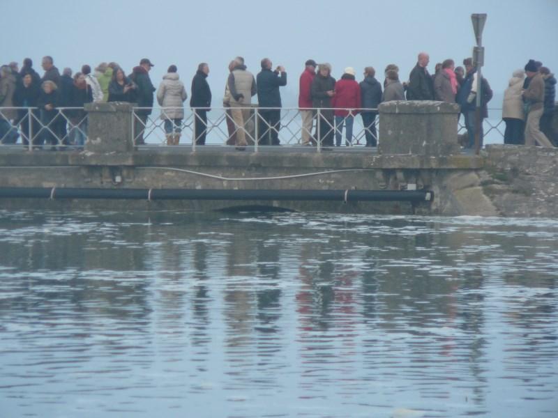 [Activité des ports hors Marine] LE PORT DE CHERBOURG - Page 15 P1160315