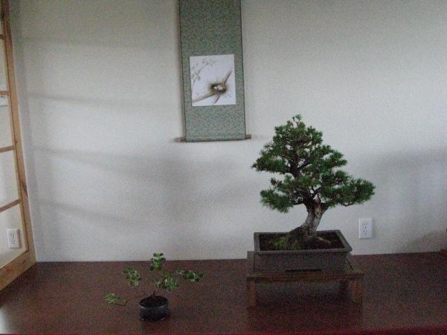 a spring display Img_3210