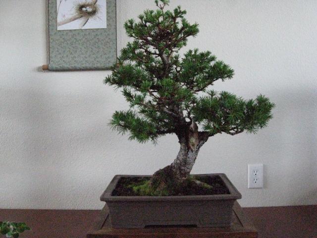 a spring display Img_3212