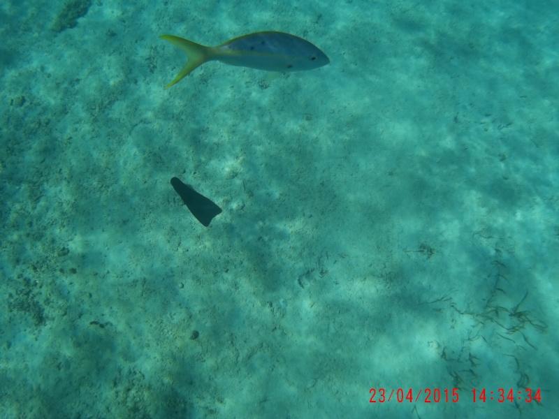 Flo et Géo découvrent la Floride et les Bahamas ! (DCL - USO - WDW) [MAJ le 26/06/16 - TR fini] - Page 2 14340010