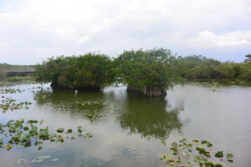 Flo et Géo découvrent la Floride et les Bahamas ! (DCL - USO - WDW) [MAJ le 26/06/16 - TR fini] Dsc_1121