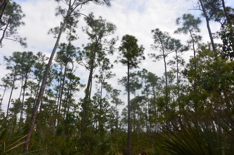 Flo et Géo découvrent la Floride et les Bahamas ! (DCL - USO - WDW) [MAJ le 26/06/16 - TR fini] Dsc_1124