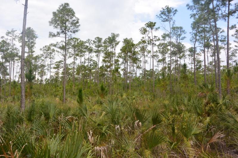 Flo et Géo découvrent la Floride et les Bahamas ! (DCL - USO - WDW) [MAJ le 26/06/16 - TR fini] Dsc_1125