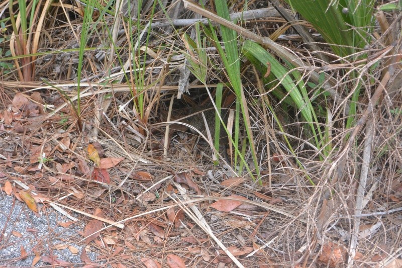 Flo et Géo découvrent la Floride et les Bahamas ! (DCL - USO - WDW) [MAJ le 26/06/16 - TR fini] Dsc_1126
