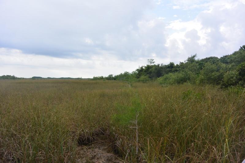 Flo et Géo découvrent la Floride et les Bahamas ! (DCL - USO - WDW) [MAJ le 26/06/16 - TR fini] Dsc_1127