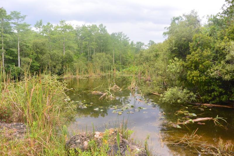 Flo et Géo découvrent la Floride et les Bahamas ! (DCL - USO - WDW) [MAJ le 26/06/16 - TR fini] Dsc_1133