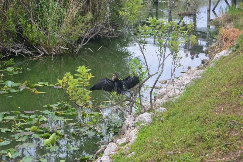 Flo et Géo découvrent la Floride et les Bahamas ! (DCL - USO - WDW) [MAJ le 26/06/16 - TR fini] Dsc_1134