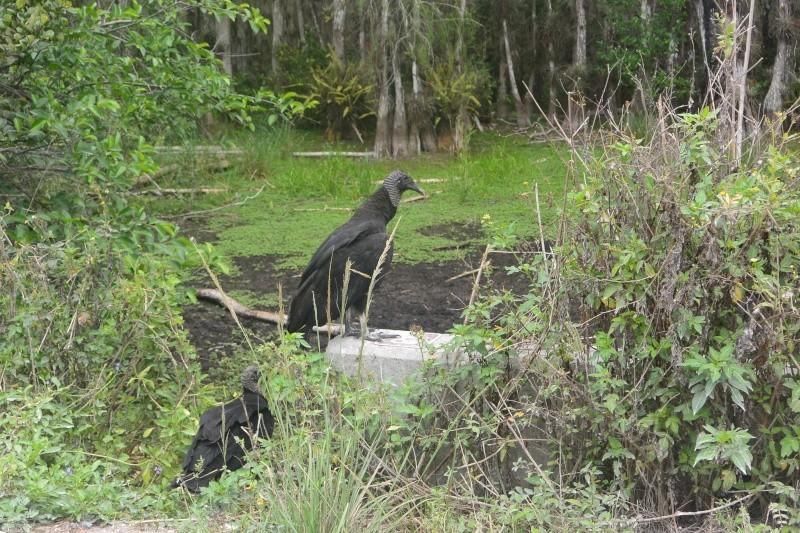 Flo et Géo découvrent la Floride et les Bahamas ! (DCL - USO - WDW) [MAJ le 26/06/16 - TR fini] Dsc_1212