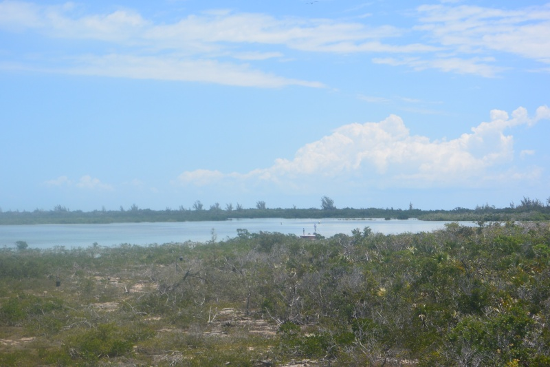 Flo et Géo découvrent la Floride et les Bahamas ! (DCL - USO - WDW) [MAJ le 26/06/16 - TR fini] - Page 2 Dsc_1315
