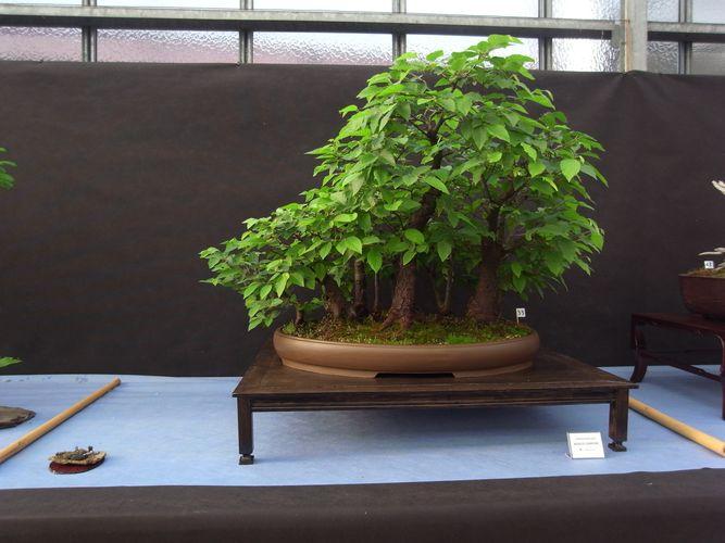 tavolino per bonsai realizzato in economia Aza10