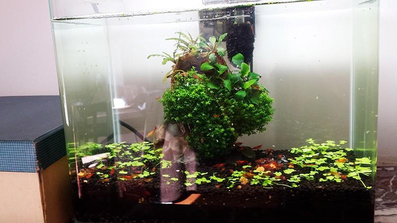 Mur végétal avec aquarium de 320L ---> Paludarium - Page 9 20150310
