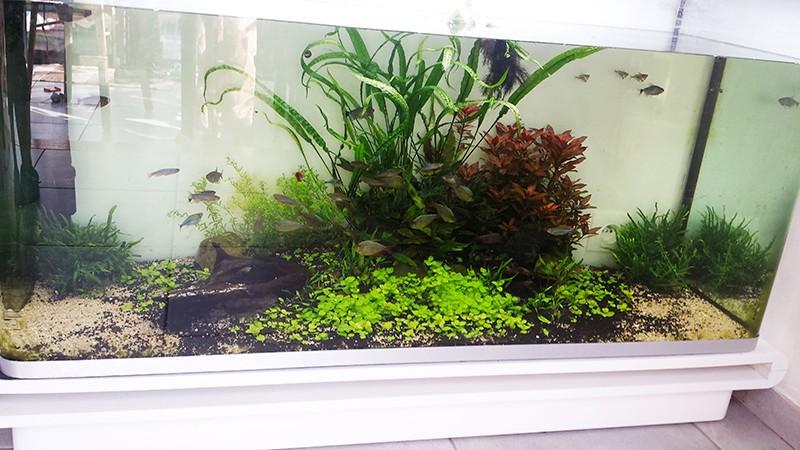 Mur végétal avec aquarium de 320L ---> Paludarium - Page 10 20150313