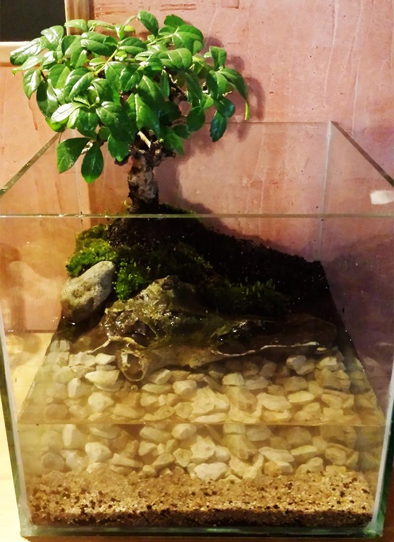 Mur végétal avec aquarium de 320L ---> Paludarium - Page 10 20150314