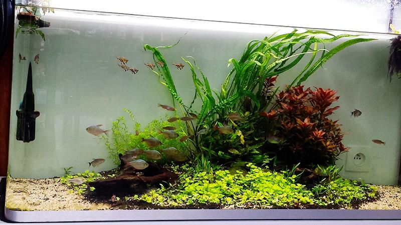 Mur végétal avec aquarium de 320L ---> Paludarium - Page 10 20150410