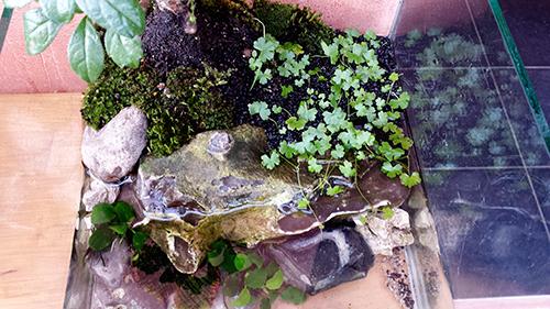 Mur végétal avec aquarium de 320L ---> Paludarium - Page 10 20150416