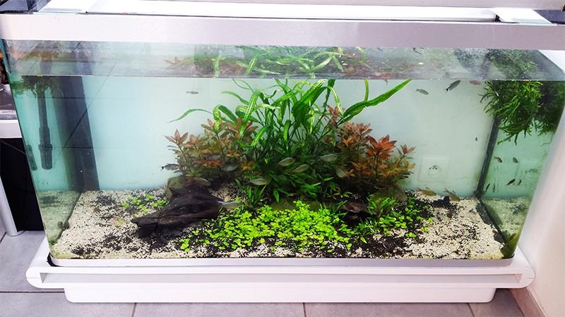 Mur végétal avec aquarium de 320L ---> Paludarium - Page 9 Aqua10