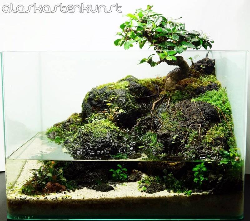 Mur végétal avec aquarium de 320L ---> Paludarium - Page 9 Bonsai10