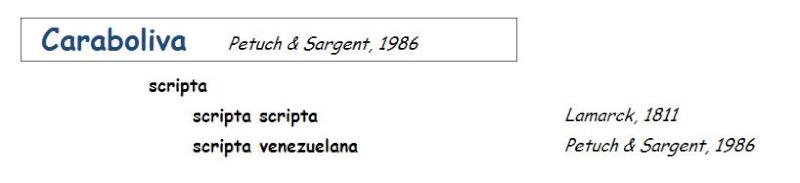Olividae Cariboliva - Le genre, ses espèces, la planche Carabo10
