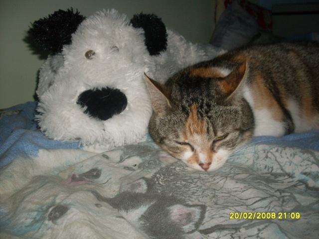 Ava tricolore et Amber tricolore et blanche - nées en 2011 e Sdc10211