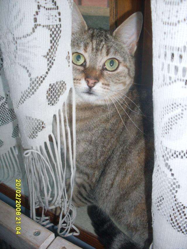 Ava tricolore et Amber tricolore et blanche - nées en 2011 e Sdc10213