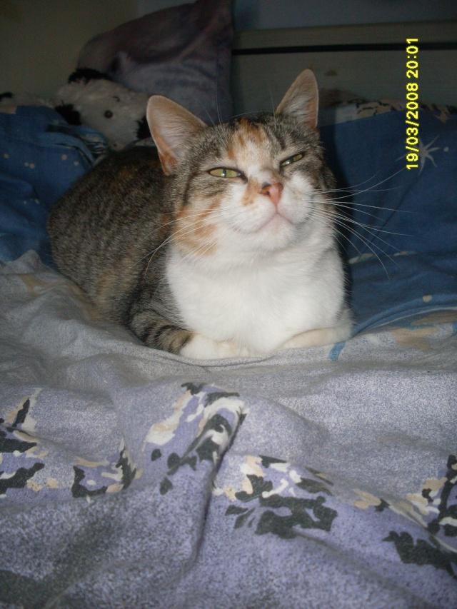 Ava tricolore et Amber tricolore et blanche - nées en 2011 e Sdc10215