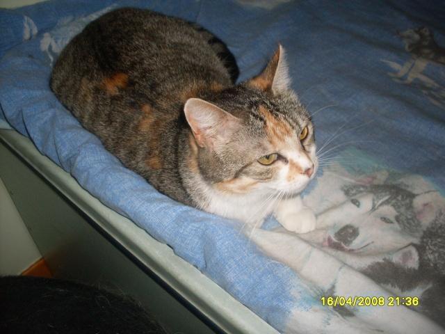 Ava tricolore et Amber tricolore et blanche - nées en 2011 e Sdc10311