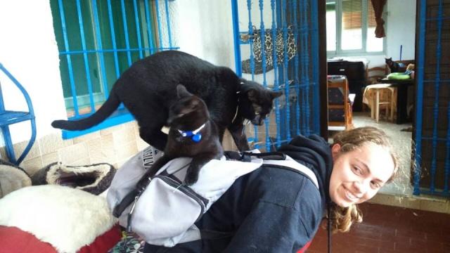Canis - Sam (gedeeltelijke adoptie) Sam_y_10